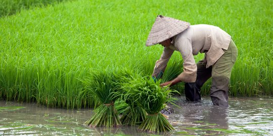 Agritech, Agriculture and Its Opportunities to Grow in Indonesia