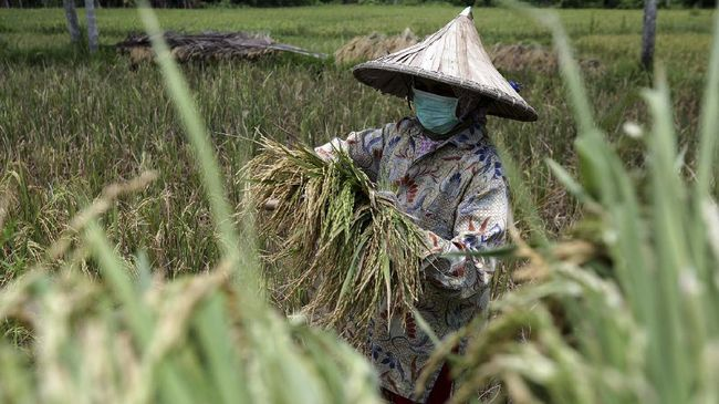 The Impact of COVID-19 on the Agriculture Sector: How to Feed Indonesia?